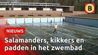 Da's pas een grote schoonmaak: Zwembad Wolfslaar wordt klaar gemaakt voor de zomer