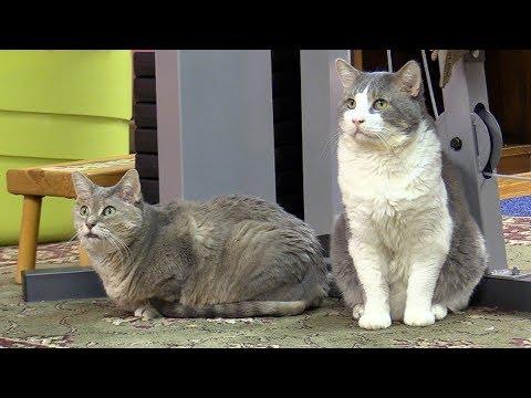 Visiting Charles & Camilla (Cats)