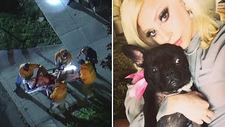 video: Lady Gaga's two French bulldogs foundafter being stolen at gunpoint