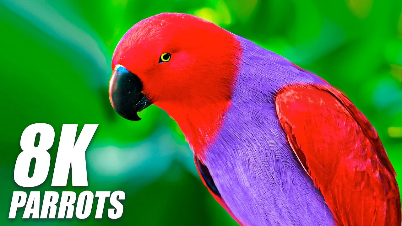 Amazing Parrots Special Collection in 8K HDR 60FPS VIDEO ULTRA HD