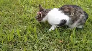Katze jagt Maus und frisst sie