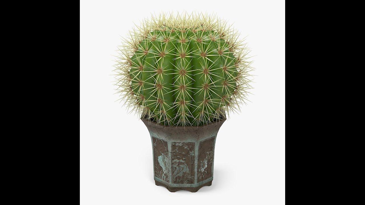 Cactus Tree Repotting ক য কট স গ ছ