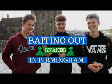 Baiting out snakes in Birmingham