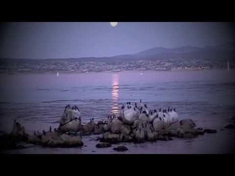 Video Lab Book: Understanding the Ecology of a Coastal Economy on Monterey Bay