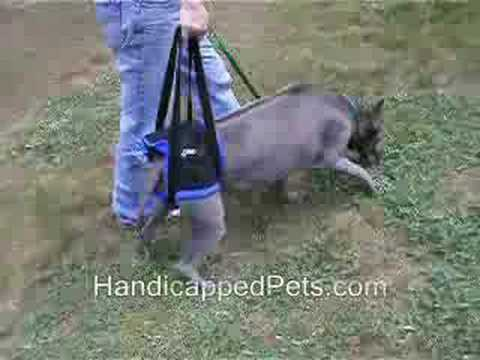 Dog Walking Sling