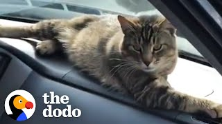 Stray Cat Decides To Work At A Car Shop And Greet Every Customer | The Dodo Cat Crazy