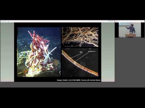 Life at deep sea hydrothermal vents: biodiversity in a new r