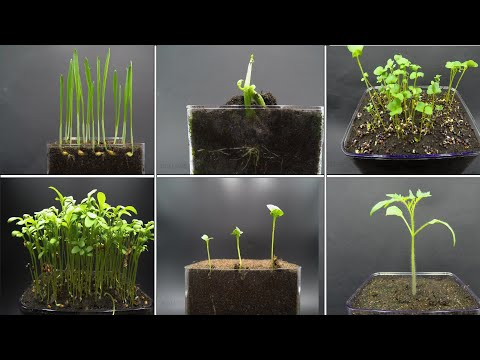 Growing Plants Time Lapse Compilation - 123 Days Of Growing in 2,5 Minutes