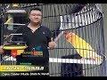 Suara Burung Lovebird Gading Milik M Adrian Sukoharjo Nyeri Di Monaliza Cup   Mp3 - Mp4 Download