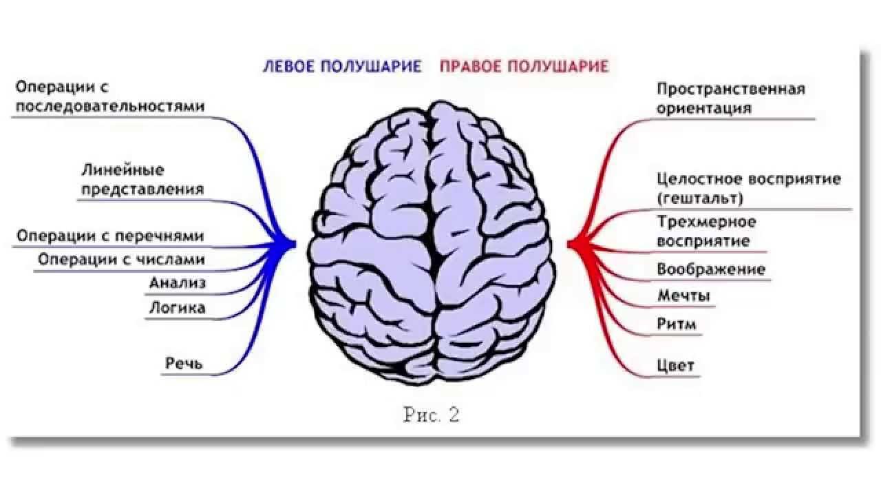 необходимо картинки для развития правого полушария мозга термобелье для