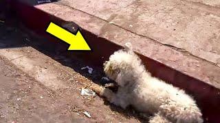 Собака лежала на улице больше суток и не могла встать.  Прохожие решили выяснить почему