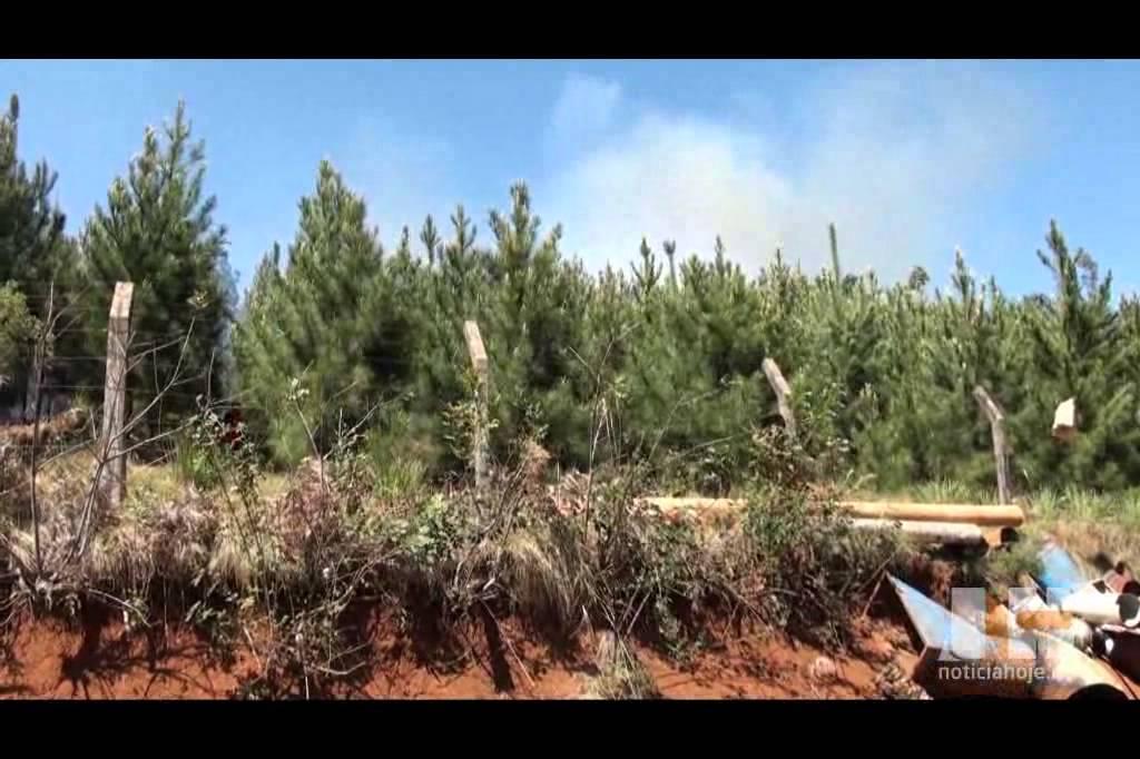 Bombeiros combatem incêndio em...