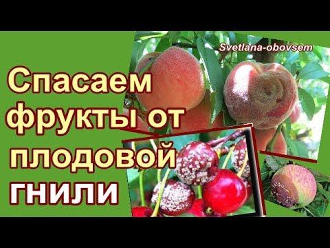 СУПЕР СРЕДСТВО ОТ ПЛОДОВОЙ  ГНИЛИ ФРУКТ -ВО ВРЕМЯ СОЗРЕВАНИЯ .СПАСАЕМ персики, яблоки, сливы ..