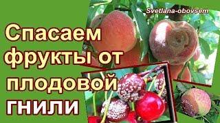 видео Борьба с паршой у яблонь груш и слив | Сайт о саде, даче и комнатных растениях.