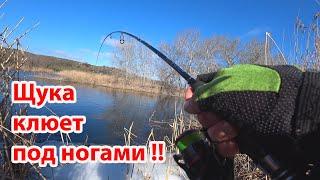 ЩУКА клюет под ногами Ловля рыбы на реке Рыбалка на спиннинг в марте