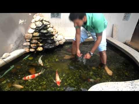 Filtro caseiro para piscinas e lagos doovi for Como construir un lago artificial