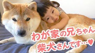 The story of a Shiba Inu who has been next to a girl since she was born, and became her big brother.