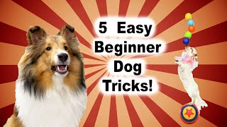 5 Easy Beginner Dog Tricks   Tips & Tricks on How to Get Started! Cricket 'the sheltie' Chronicles