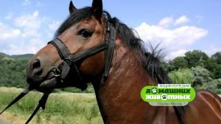 Энциклопедия домашних животных №5 - Гуцульский конь