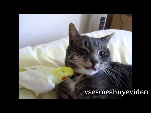 видео прикол забавный попугай кеша говорилка
