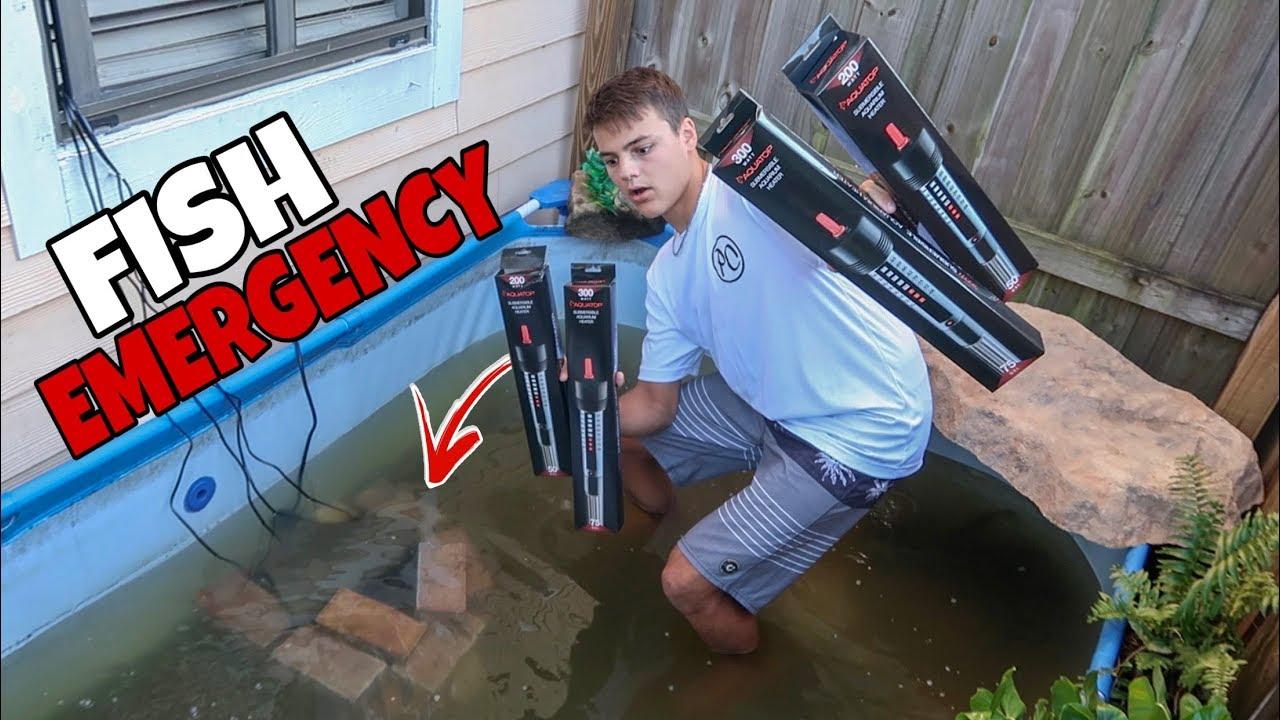 fish-emergency-in-pool-pond