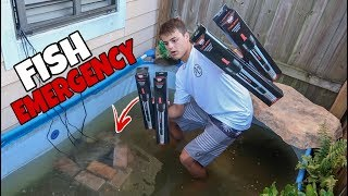 FISH *EMERGENCY* in POOL POND!!!