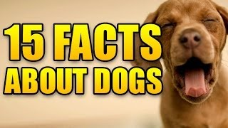 15 Awesome Facts About Dogs! Your Monday Cure!