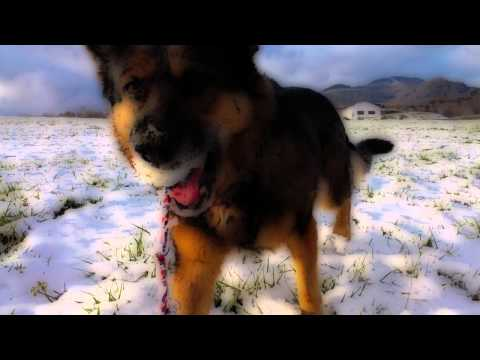 German Shepherd and American koker - winter photos modified with effect cartoon