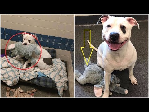 A dog who scheduled to be euthanized feels less depressed in the shelter because of his elephant toy