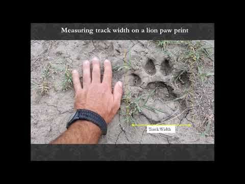 Wildlife Tracking - Techniques And Equipment For Learning To Track For Environmental Educators.