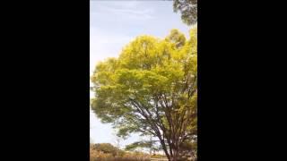 2012年4月29日に高砂市で行われた女声合唱団わらべさんのリサイタルに賛...