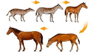 Эволюция лошади (рассказывает палеонтолог Ярослав Попов)