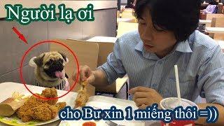 Lần đầu dẫn Pug Bư đi ăn KFC mừng U23 Việt Nam 🐶 Không biết có bị đuổi không =)) Pugk Vlog