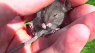 Cute Baby Mouse in My Hand