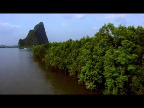 What's a mangrove?