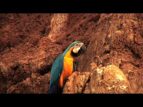 the parrots of the rainforest