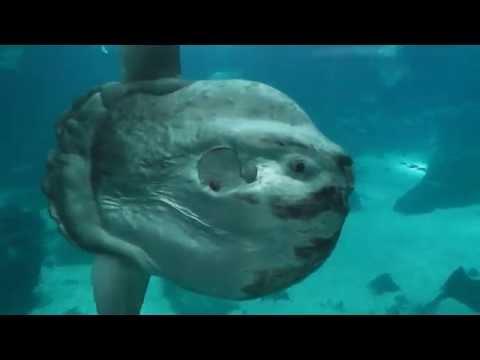10 самых причудливых рыб мирового океана • НОВОСТИ В