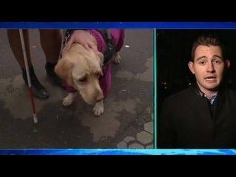 Видео, Кража собаки-поводыря виновной угрожает 5 лет тюрьмы