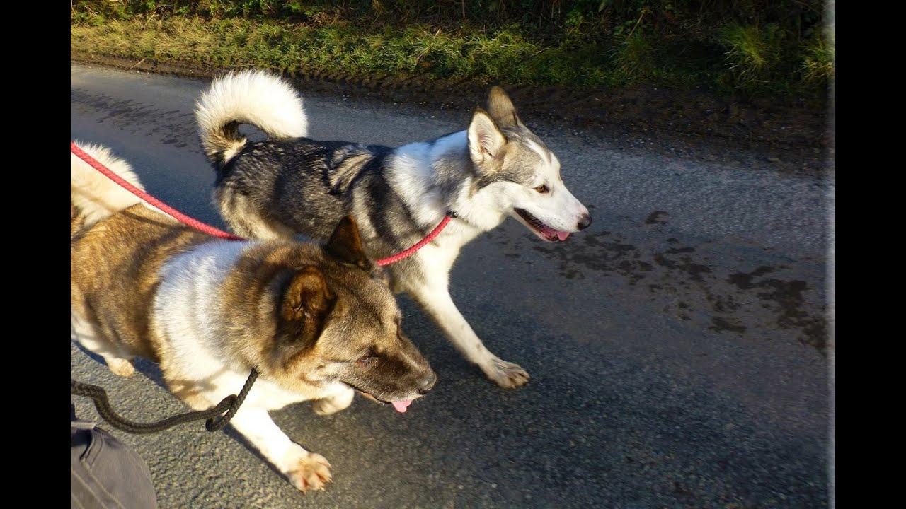 North Clwyd Dog Rescue