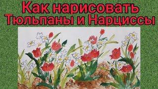 Как нарисовать Нарциссы и Тюльпаны урок How to draw Narcissus and Tulips tutorial 수선화 튤립 그림 그리기