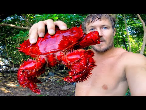 Rare King Crab & Coconut Crab - Eating Delicious Seafood