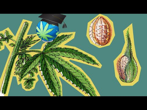 How To Breed AND Bud With 6 Cannabis Plants OR LESS!