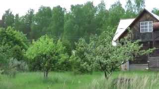 Мы продаём, а вы можете купить дом в д. Дубки и 25 соток ухоженной земли.(, 2015-05-30T07:17:19.000Z)