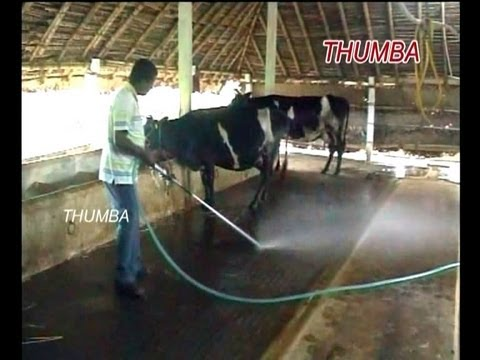 Dairy Dung Cleaning Pump Thumba Agrotech Palani Tamil