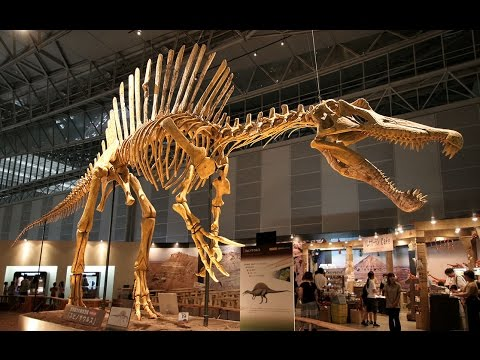 Dinosaur News Center: Longest Carnivorous Dinosaur