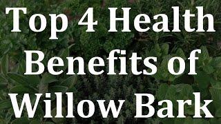 top 4 health benefits in willow bark