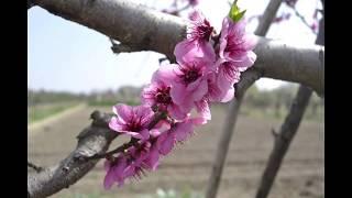 Primavera en Fitero
