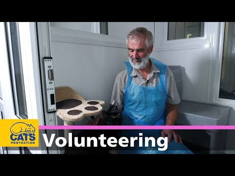 Becoming a cat care volunteer with Cats Protection