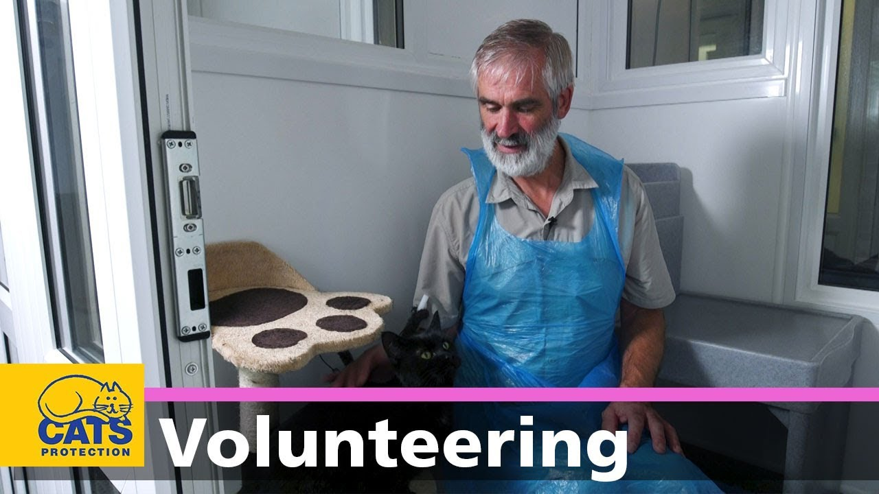 Becoming A Cat Care Volunteer With Cats Protection Youtube