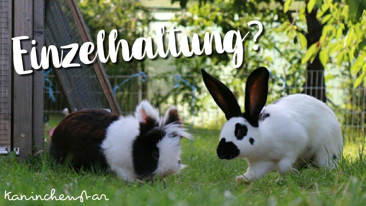 21+ EINZELHALTUNG von Kaninchen   Kaninchenstar   YouTube Fotos